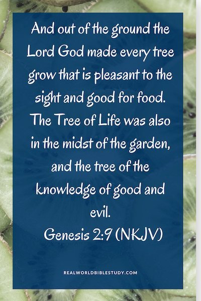 "The Garden of Eden is one of the most well-known gardens of the Bible! ""The Lord God made every tree grow that is pleasant to the sight and good for food."" Genesis 2:9 - https://www.realworldbiblestudy.com"